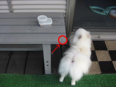 snap_tekutekunikki2009_201172215639.jpg