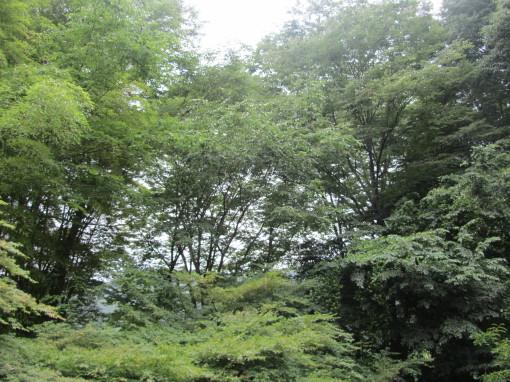 月待の滝0001_4