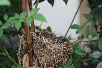 鳥の巣0001