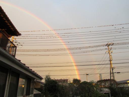 虹0001