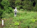 森林ボランティアで培った刈り払い機使用(木下美穂)