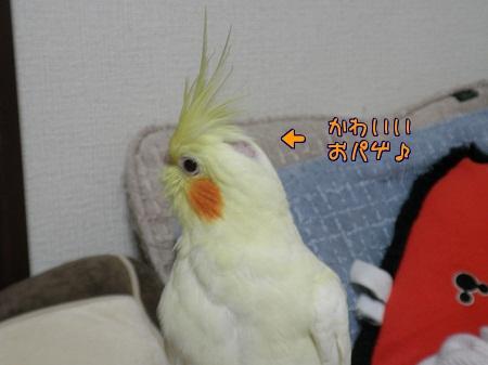 ルチノーおパゲ