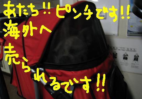 2008020927.jpg