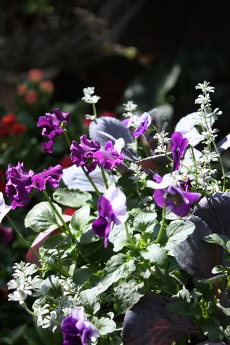 T's Garden Healing Flowers‐P・フィジーグレープの寄せ植え