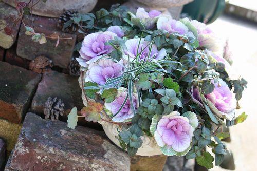 T's Garden Healing Flowers‐ミニハボタンの寄せ植え