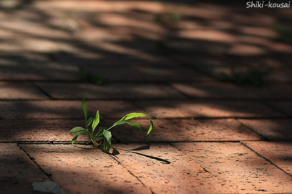 植物とレンガ