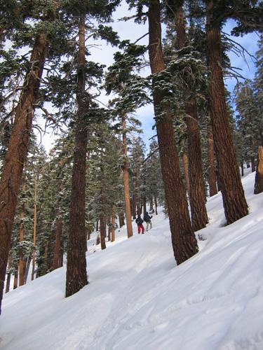 08021スキーWoodコース