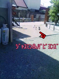 20070703085204.jpg