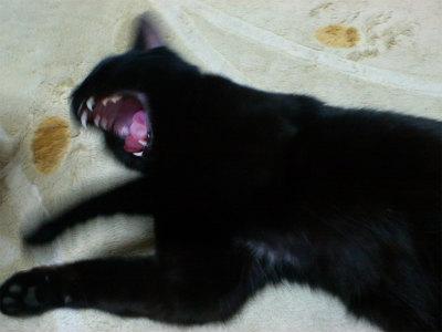 猫写真 001