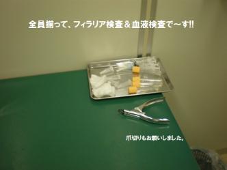 03-03_20110504091737.jpg