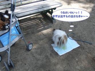 10-03_20110412211155.jpg