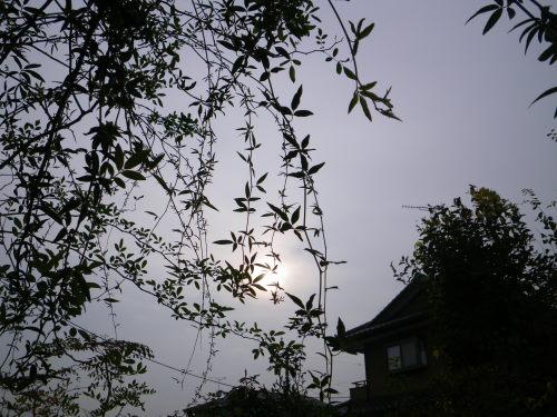 太陽1105