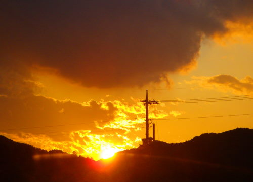 夕陽1115