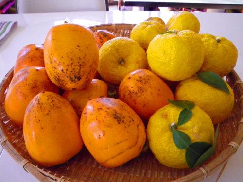 柚子と蜂屋柿1126