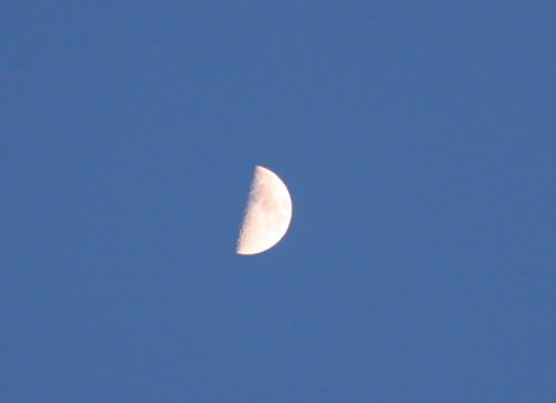 上弦の月131IMG_6451