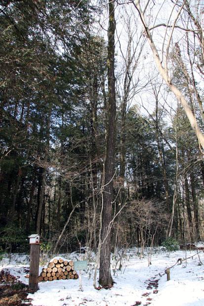 リンデンの森