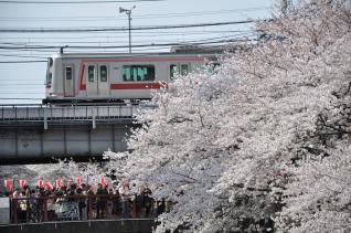 2011年4月10日 東急東横線代官山~中目黒 5050系