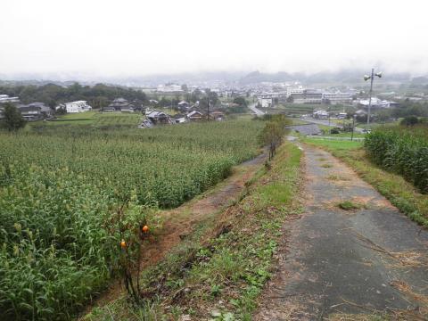 柿と農道124