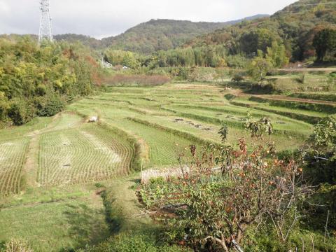 秋の棚田30