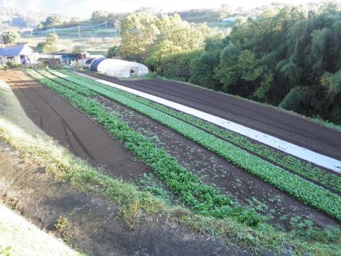 野菜畑43