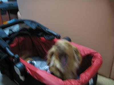 doggybuggy-2.jpg