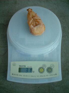 10インド SBL-14 蛹化体重