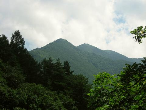 木々の合間から深緑の山々を望む