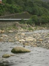 新茶屋付近の木曽川