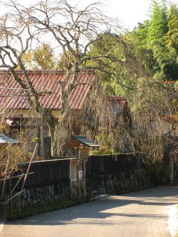 医王寺の枝垂れ桜
