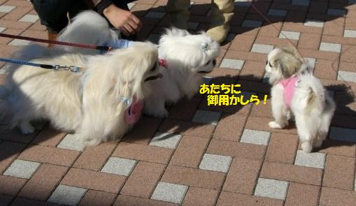 20071103221044.jpg