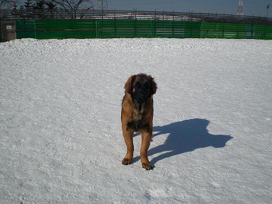 雪あかり 009