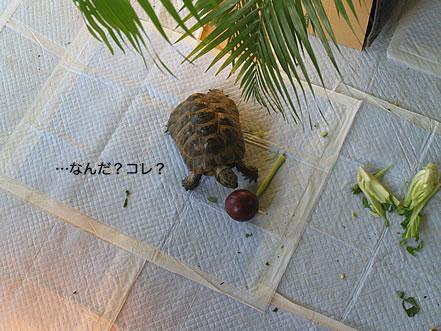 080207_hisui2.jpg