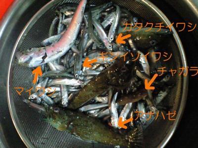 20071216釣り