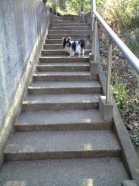 タイシと階段