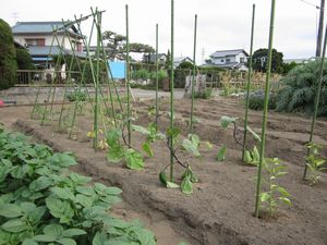 IMG_2540 夏野菜