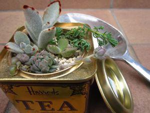 IMG_3028 紅茶缶
