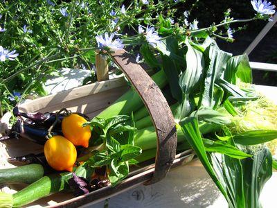 IMG_3216 野菜