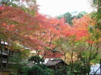 箕面の紅葉1