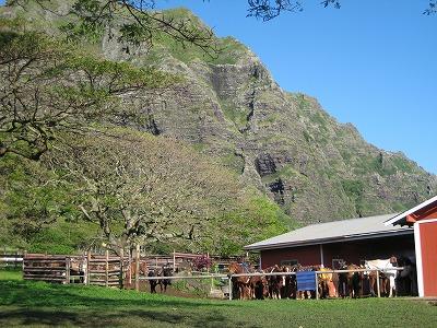 ハワイ2008 071