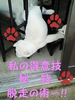 脱走ミルク①-2