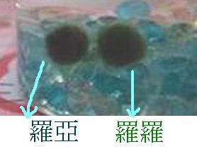 20070128171940.jpg