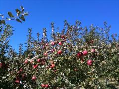 Apple_2011_1