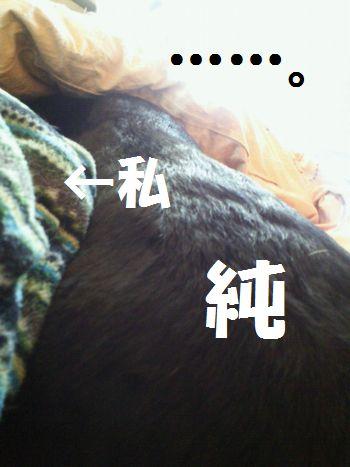 110323_blogjun1.jpg