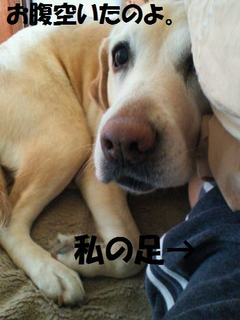 110323_blogubu1.jpg