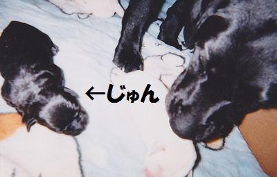 110327_blogjun4.jpg