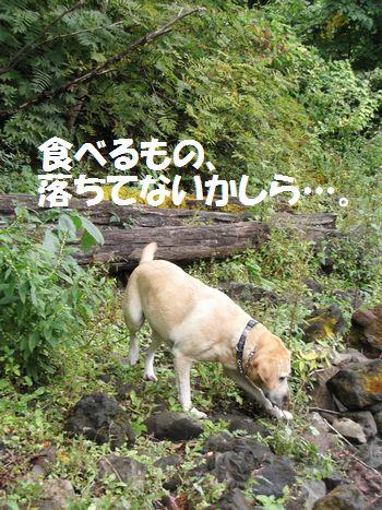 110329_blogubu3.jpg