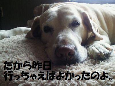 110403_blogubu12.jpg