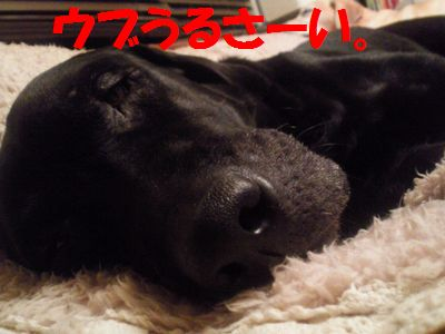110407_blogjun.jpg