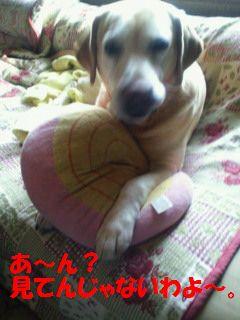 110410_blogubu1.jpg