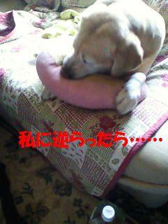 110410_blogubu2.jpg